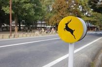 鹿とびだし注意