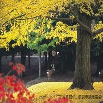 【奈良公園】モミジやイチョウなど多種類の紅葉を楽しむことができる。(11月上旬~12月上旬が見ごろ)