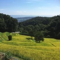 【周辺】暗峠/「日本の道100選」「美しい日本の歴史風土100選」に選ばれています。