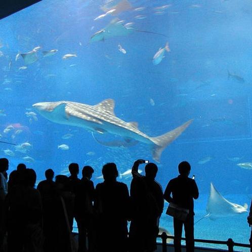 美ら海水族館大水槽(車で約90分)