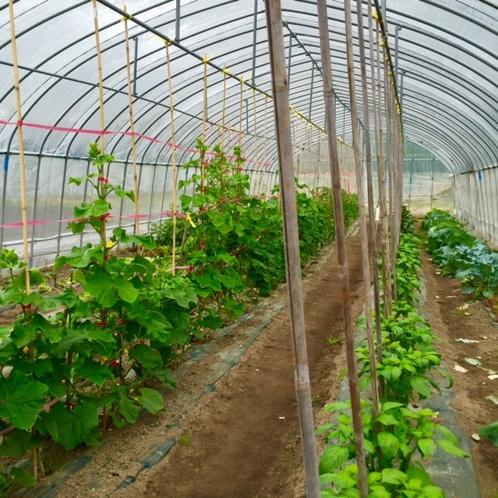 数種類の野菜が育っております