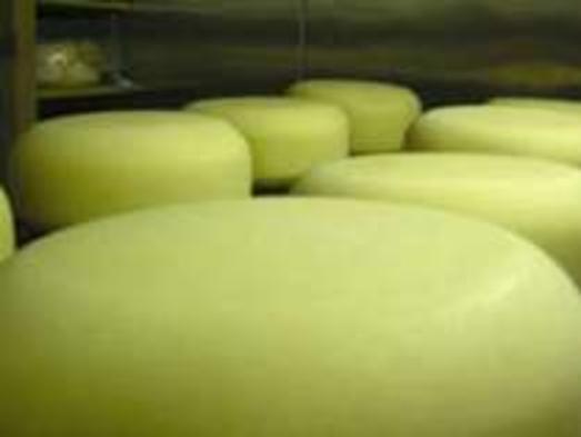 【蔵王ハートランドの体験プラン】蔵王で「チーズづくり」を体験して自然を満喫♪