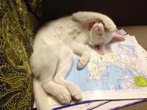ユメビトハウスの看板猫「アル」