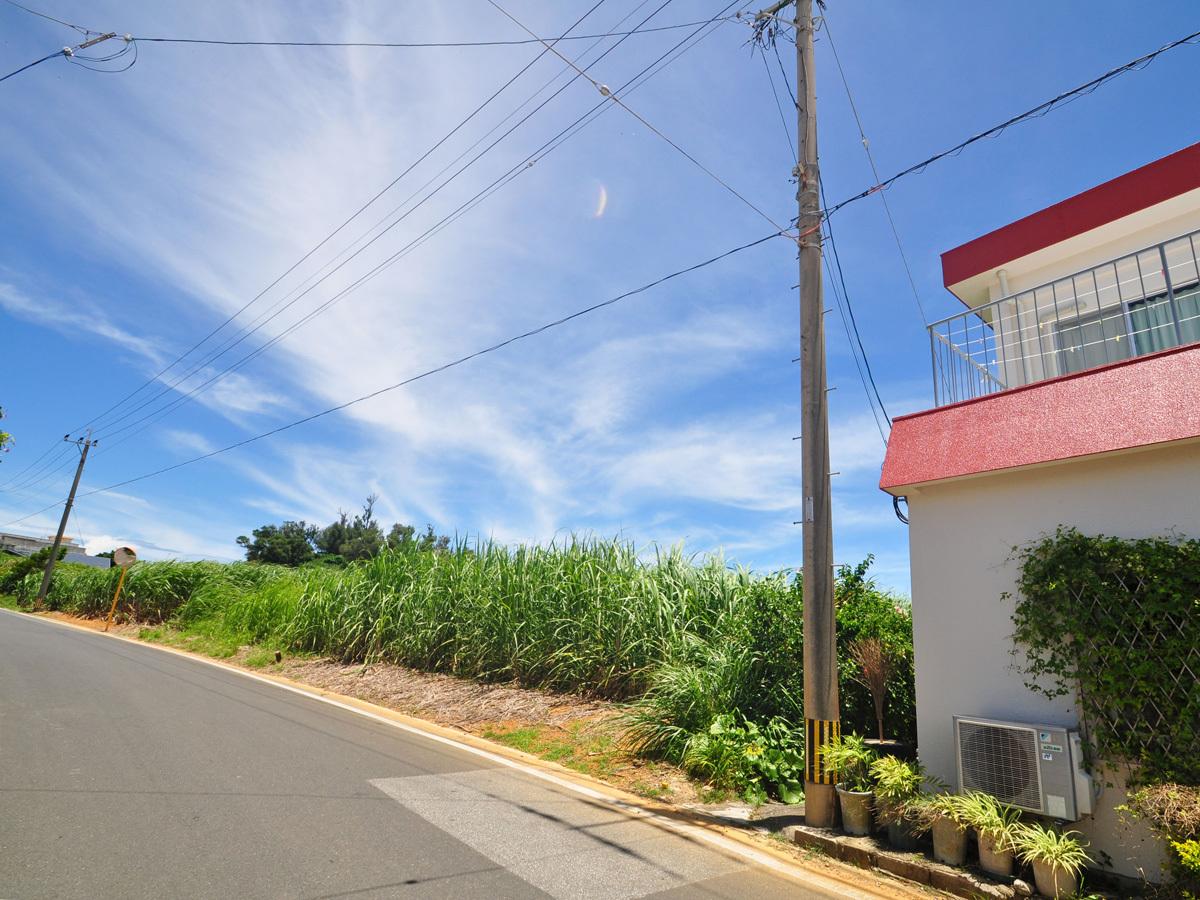 【外観】宿隣にはサトウキビ畑が広がっています。