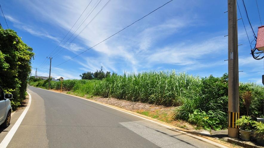 【外観】広々と続くサトウキビ畑。
