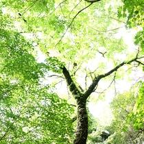 季節ごとに色づく庭の樹々たち
