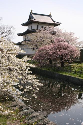 当別荘から約一時間半、さくらで有名な松前城