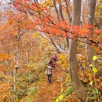 *黒倉山と鍋倉山の間に位置する「久々野峠」。秋一色を感じながらトレッキングを楽しめます♪