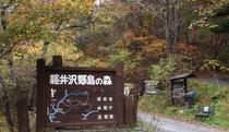 軽井沢野鳥の森 いこい山荘より徒歩約10分
