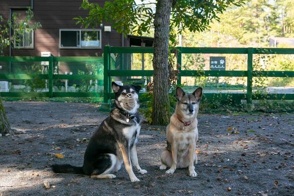 【1泊2食付】お部屋もダイニングも愛犬と一緒。安曇野の自然と天然貸切温泉を満喫。