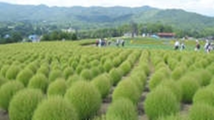*コキアと季節の花が植えられている「ひるがの高原コキアパーク」