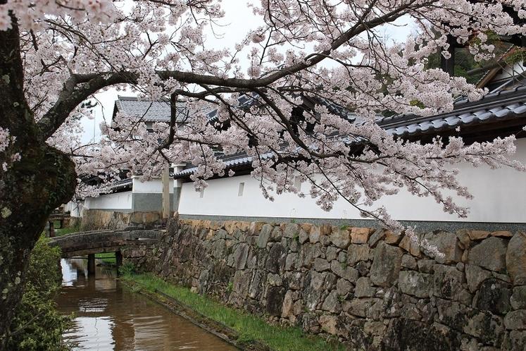 【桜咲く城下町】
