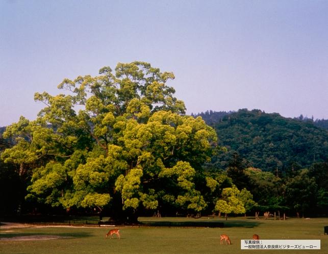 奈良公園 飛火野