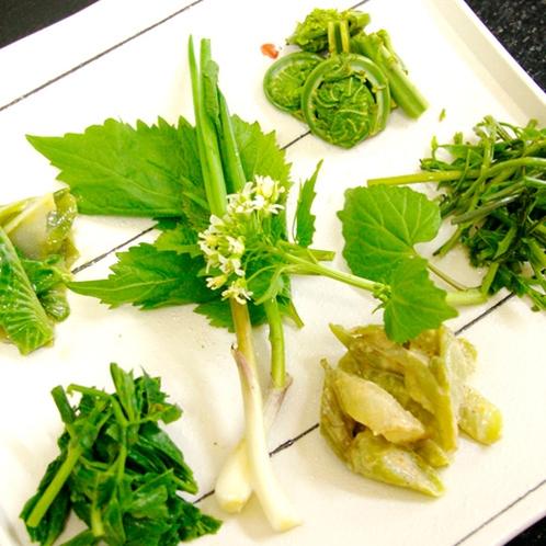 *夕食一例/豊かな山の恵み。松之山の山菜はアクが少なく食べやすいのが特徴です。