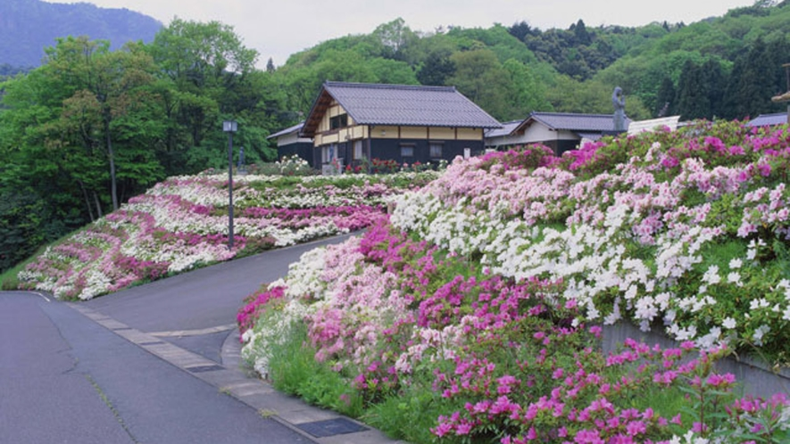*【五色山公園】季節ごとに色鮮やかな花々が楽しめます