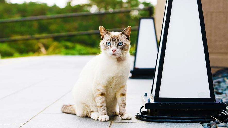 当館の看板猫「ララ」が皆さまをお出迎えいたします