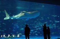 かごしま水族館「いおワールド」