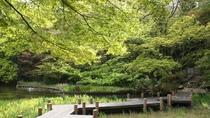 御殿山庭園 新緑