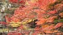 御殿山庭園 紅葉