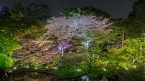 御殿山庭園 春のライトアップ