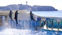 【観光】新江ノ島水族館