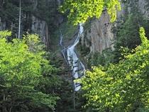 【銀河の滝】断壁から、白糸のように繊細に流れ落ちていきます。