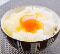 【感動の朝ごはん】絶品☆紀州うめたまごの卵かけごはん