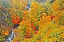 秋の渋黒沢