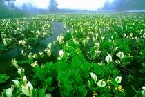 春の大場谷地