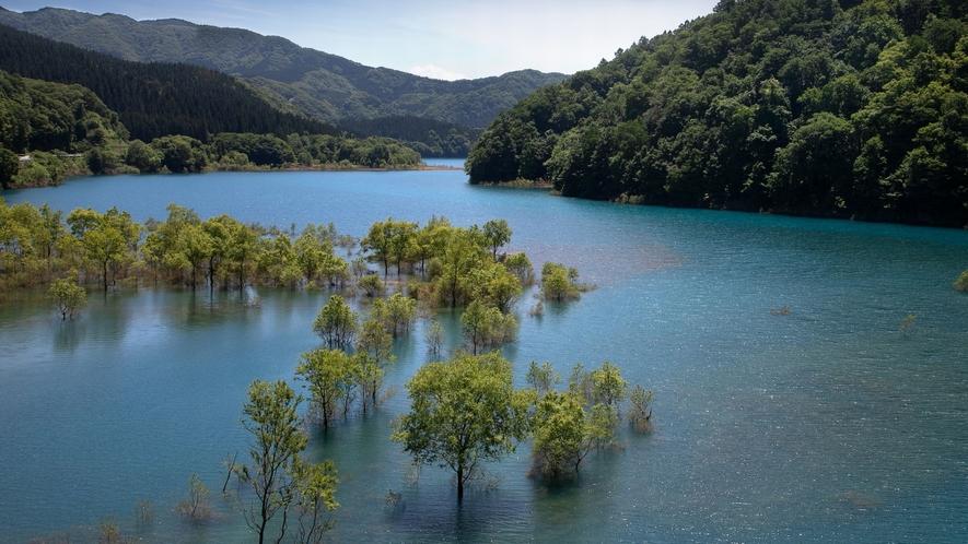 【秋扇湖(鎧畑ダム湖)】水没林