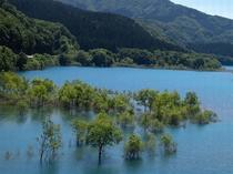 【周辺観光】秋扇湖(鎧畑ダム湖)の水没林