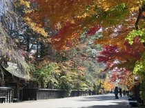 【周辺観光】紅葉の角館武家屋敷通り