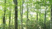 【周辺のぶな林】新緑