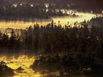 【周辺観光】八幡平山頂付近の湿原