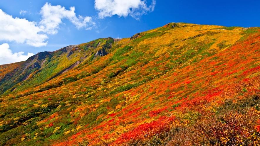 *【周辺/栗駒山】当館より車で60分!紅葉スポットとしても有名な栗駒山。