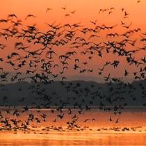 *【周辺/伊豆沼】ラムサール条約登録の湿地で、様々な渡り鳥が訪れる。