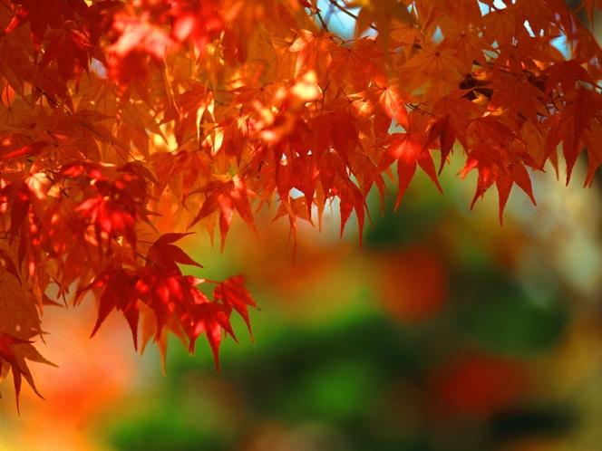 秋の宿泊プラン