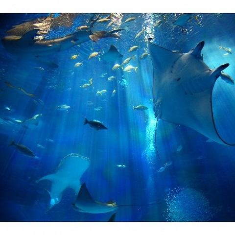 海洋博公園 沖縄美ら海水族館(2)
