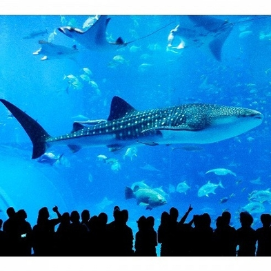 美ら海とくとく5パスプラン【美ら海水族館+人気観光4施設入場券】】★駐車場無料先着30台