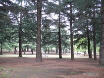 野川公園/当館より車10分・徒歩25分