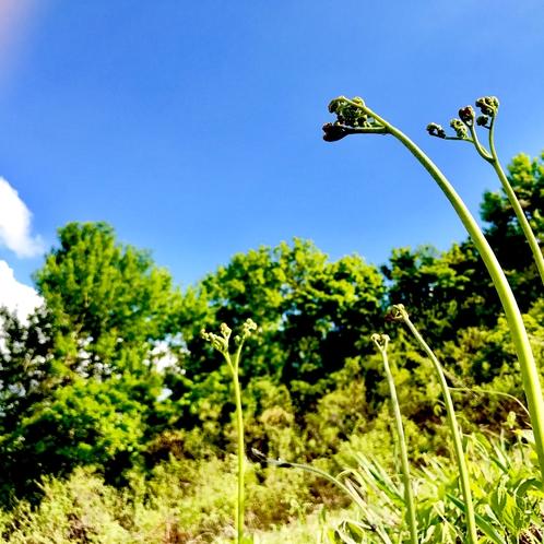 【春】山菜採り