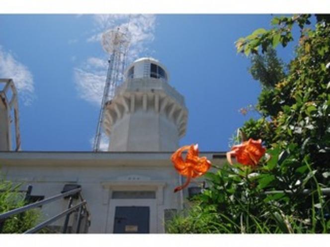 浜かんぞうの花と佐田岬灯台