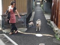 ロンとルイの仲良し散歩です