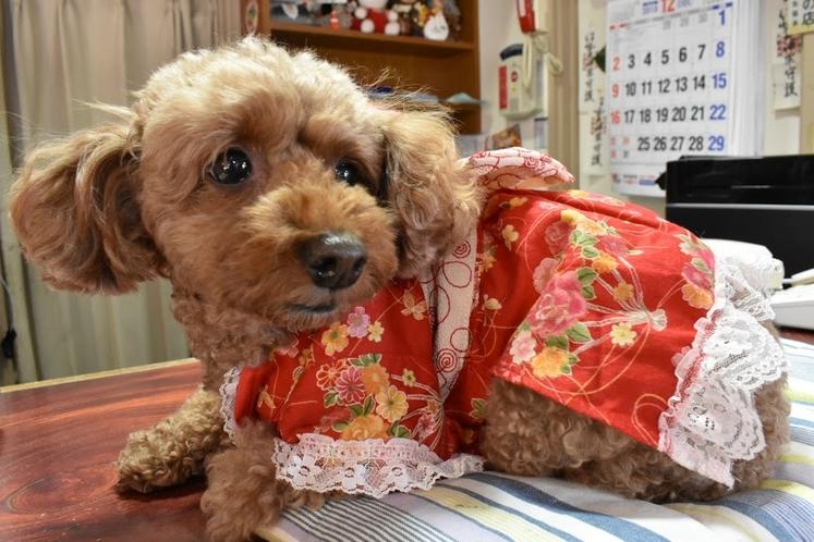看板犬ヤマト