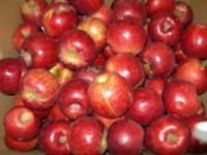 秋の宝石『りんご』