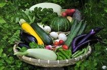 サワルージュの野菜たち