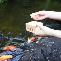 ■「庭園」内の池には堂々とした錦鯉が