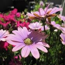 テラスの花(春)