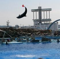 名古屋港水族館http://www.nagoyaaqua.jp/index.html