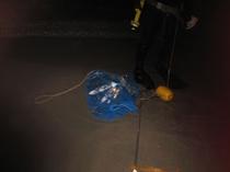 素潜りで仕留めたチヌが網へ(2012.4.24撮影)